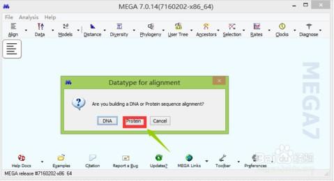 mega进化树软件